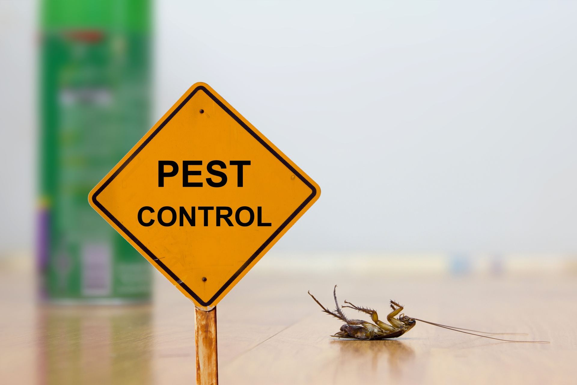 24 Hour Pest Control, Pest Control in Leatherhead, Oxshott, Fetcham, KT22. Call Now 020 8166 9746